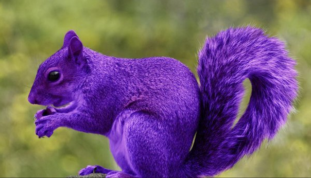 Innovate to find the 'purple squirrels' featured image