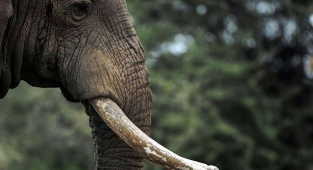 Disparition des éléphants : quand la communication s'échoue sur les rives du consumérisme featured image